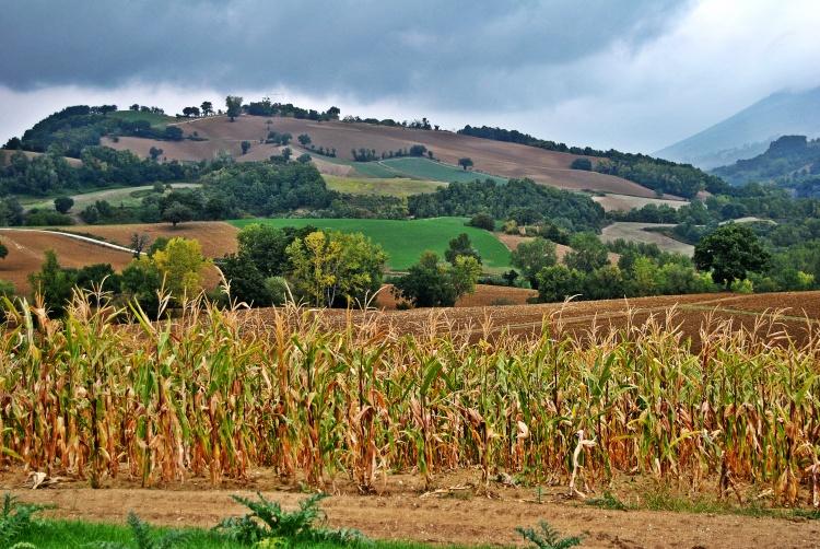 Fattoria Fucili landscape