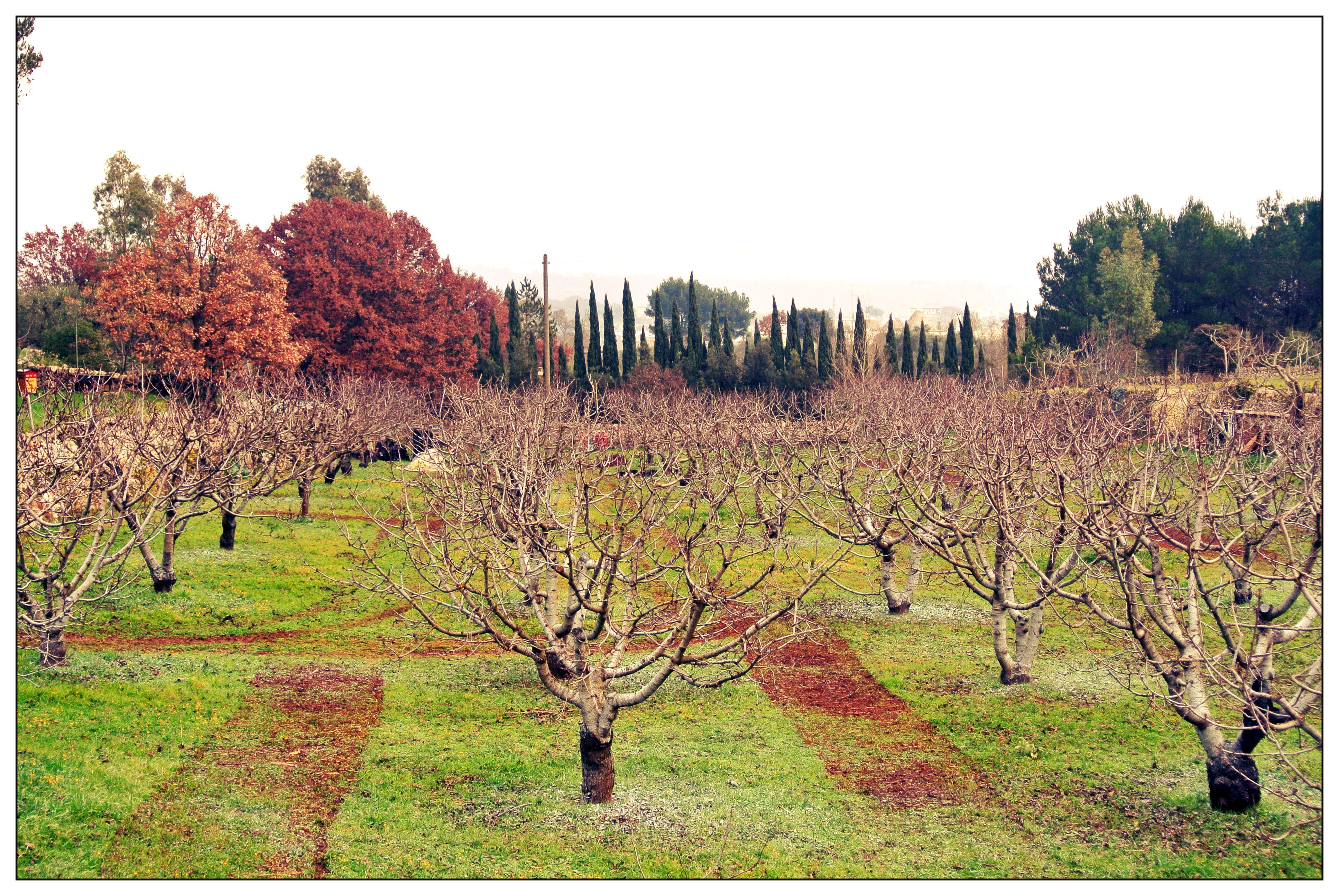 Alla scoperta dei giardini di pomona foodtrip and more - Giardini particolari ...