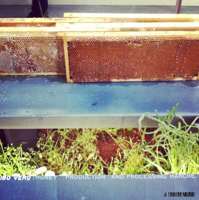 Miele delle Marche Alce Nero | Foodtrip and More