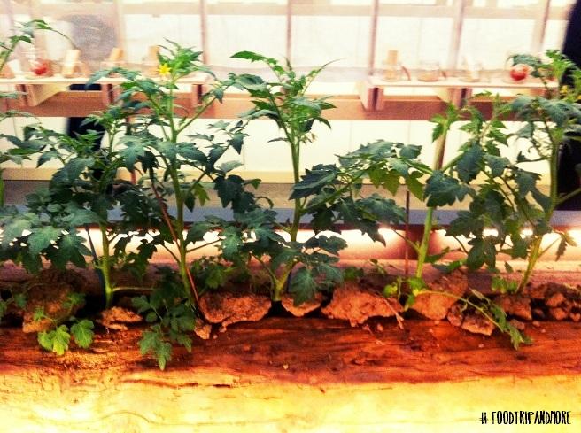 pomodori dell'Emilia Alce Nero | Foodtrip and More