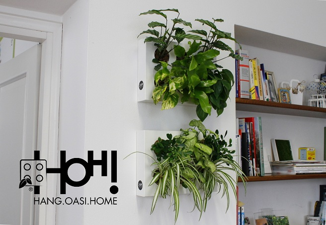 hang oasi home | Foodtrip and More