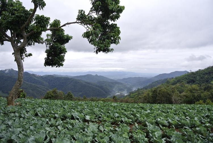 Itinerario 15 giorni in Thailandia   Foodtrip and More